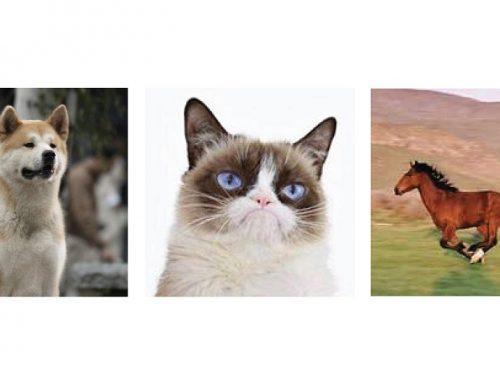 Top 3 kedvenc állat